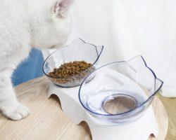 Cat's Feeders
