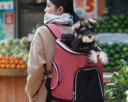 Backpacks - Carriers